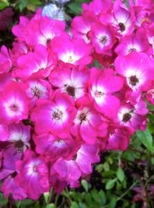Intensiva blommor - liten bild