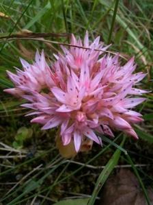 rosa blomma - liten bild